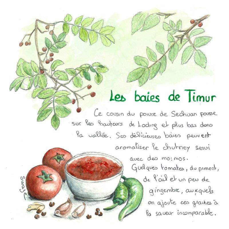Poivre de Timur ou de Timut